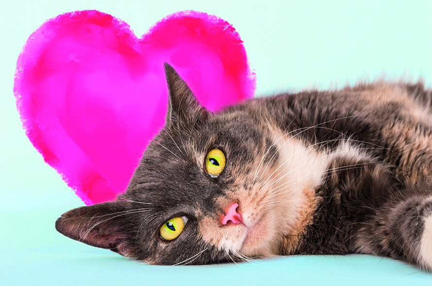Fun things to do in London for Valentines day, Feline Lonely
